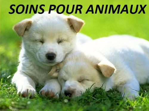 Soins pour Animaux